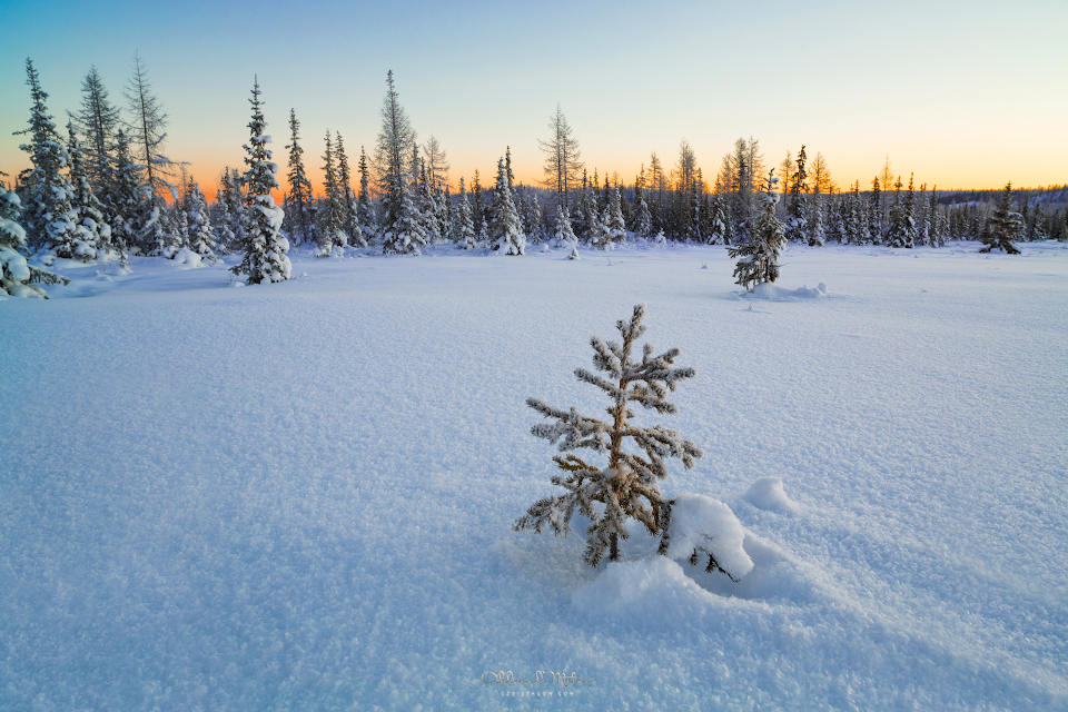 Beautiful winter landscape with small fir