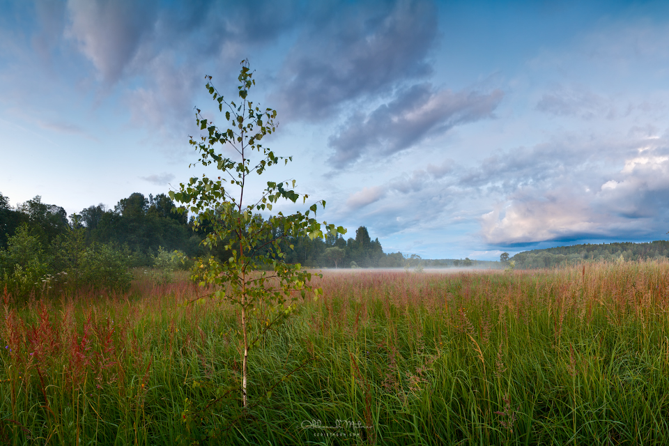 Evening landscape in a wild field with fog